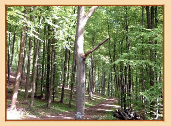 Rinteln - So idyllisch sieht es auf einem Waldweg in der Nähe des OT-Steinbergen aus