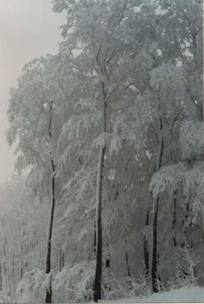 Winter Ein Bild aus der guten alten Spiegelreflexkamerazeit. Am Klippenturm.
