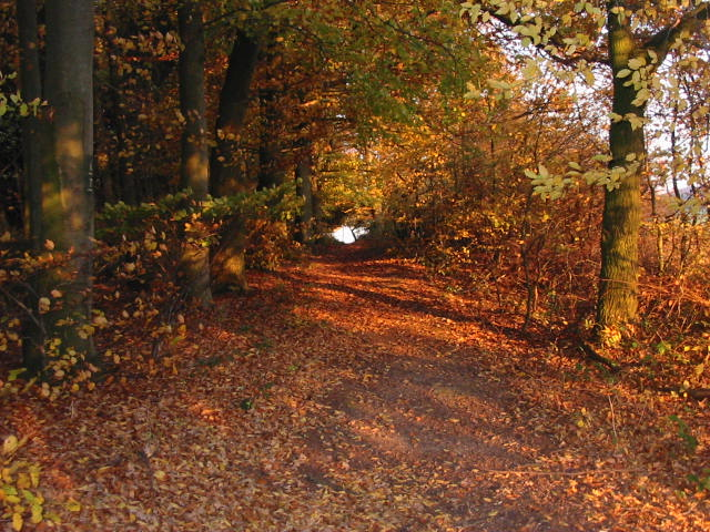 Aerzen Herbstspaziergang