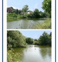 Die Graft ist ein kleiner See mitten im Blumenwall (Park) in Rinteln gelegen.